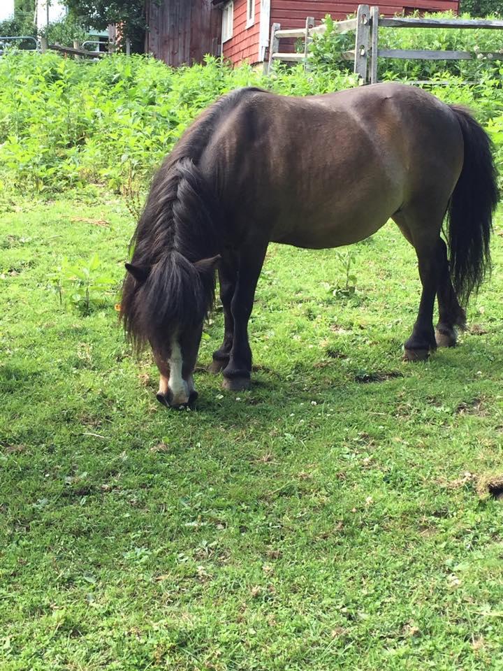 The Dorset Equine Rescue – A non-profit horse rescue in