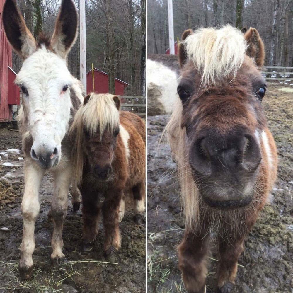The Dorset Equine Rescue – A non-profit horse rescue in Southern Vermont