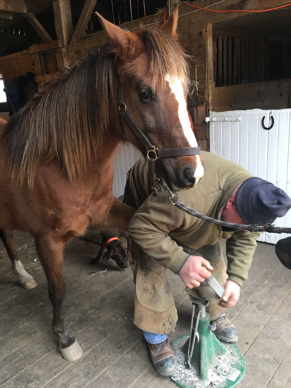 Pay to have a horse's feet trimmed