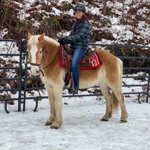 duke horse available for adoption