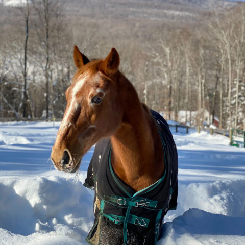 rusty horse available for adoption