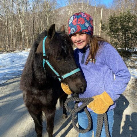 shetland pony available for adoption