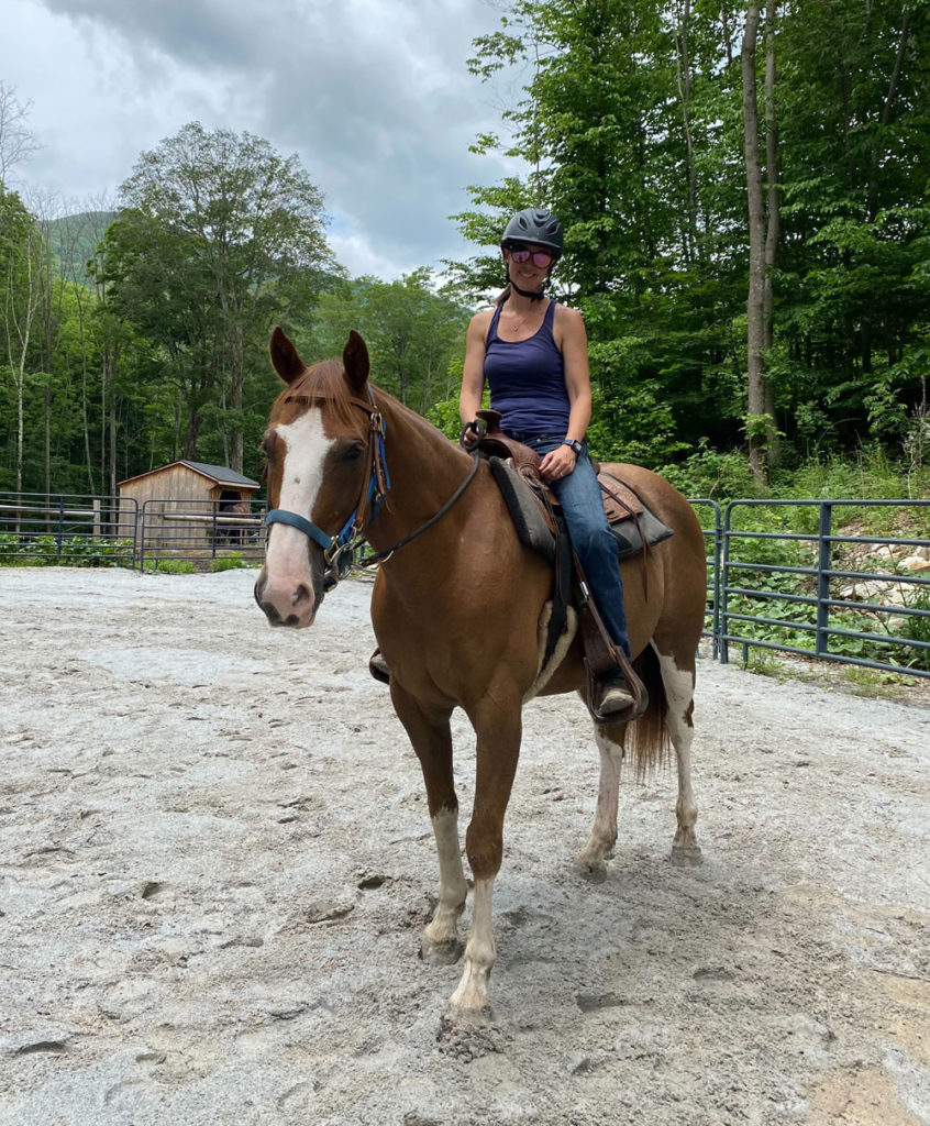 horse available for adoption